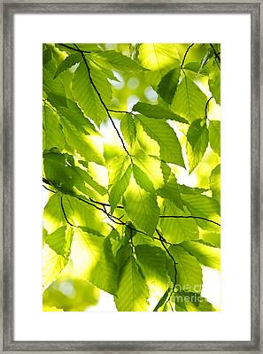 Green Spring Leaves Framed Print by Elena Elisseeva