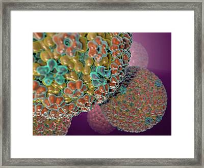 Herpes Simplex Virus Framed Print by Hipersynteza