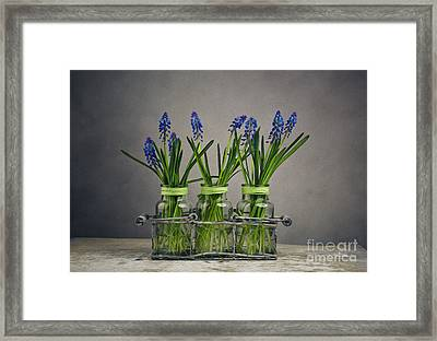 Hyacinth Still Life Framed Print by Nailia Schwarz