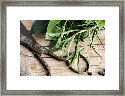Kitchen Herbs Framed Print by Nailia Schwarz