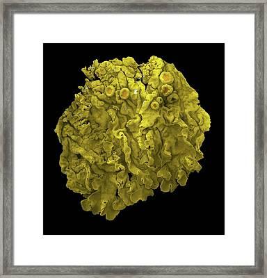 Lichen Framed Print by Karl Gaff