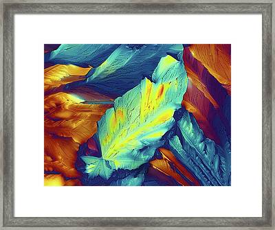 Light Micrograph Of Citric Acid Crystals Framed Print by Alfred Pasieka