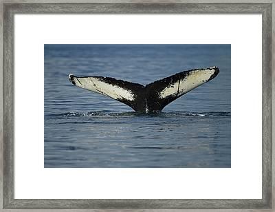 North America, Usa, Alaska Framed Print by Joe and Mary Ann Mcdonald