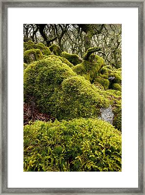 Oak Woodland On Dartmoor Framed Print by Science Photo Library