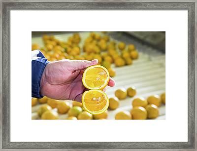 Orange Farming Framed Print by Jim West
