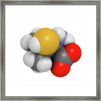 Penicillamine Drug Molecule Framed Print by Molekuul