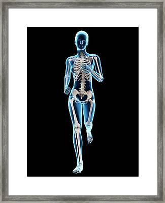 Skeletal System Of A Runner Framed Print by Sebastian Kaulitzki
