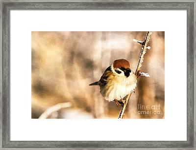 Sparrow Framed Print by Odon Czintos