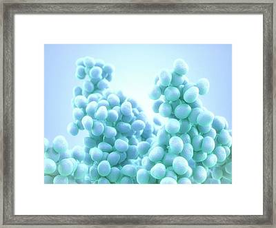 Staphylococcus Bacteria Framed Print by Maurizio De Angelis