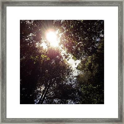 Sunlight Framed Print by Les Cunliffe