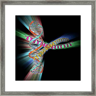 Transcription Factor Complexed With Dna Framed Print by Laguna Design