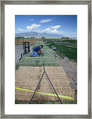 Transporting Bales Of Hay Framed Print by Jim West