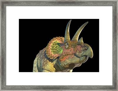 Triceratops Dinosaur Framed Print by Roger Harris