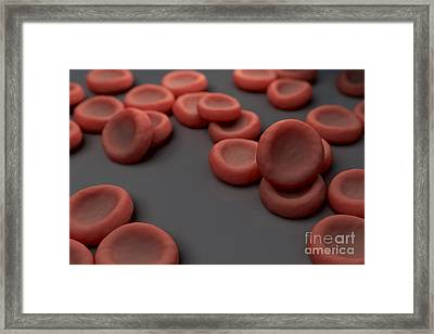 Red Blood Cells Framed Print by Science Picture Co