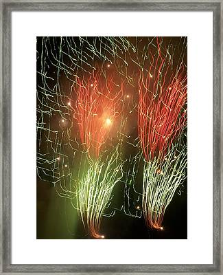 4th Of July Framed Print by Tammy McDougall
