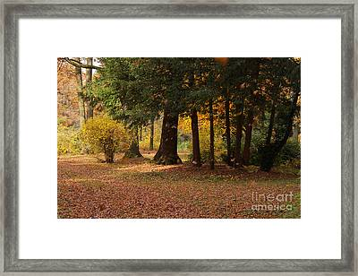 Autumn Framed Print by Angela Doelling AD DESIGN Photo and PhotoArt