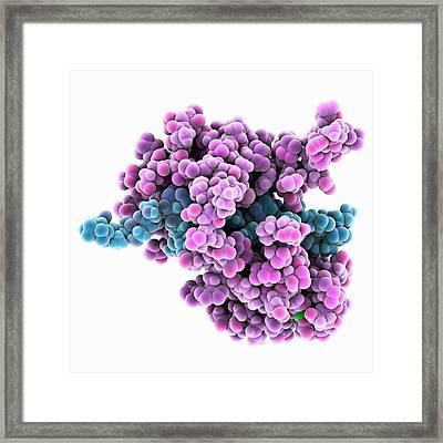 Calcium-binding Protein Molecule Framed Print by Laguna Design