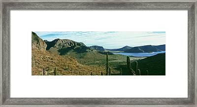 Cardon Cactus Pachycereus Pringlei Framed Print by Panoramic Images