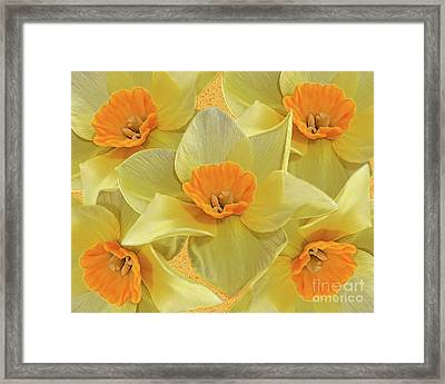 5 Daffy's On Parade Framed Print by Andee Design