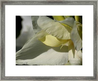 Dwarf Canna Lily Named Ermine Framed Print by J McCombie