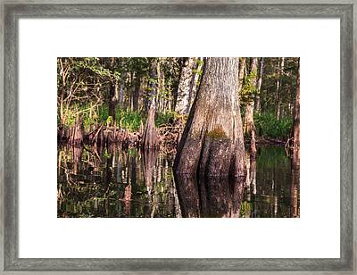 Fisheating Creek Framed Print by Jonathan Gewirtz