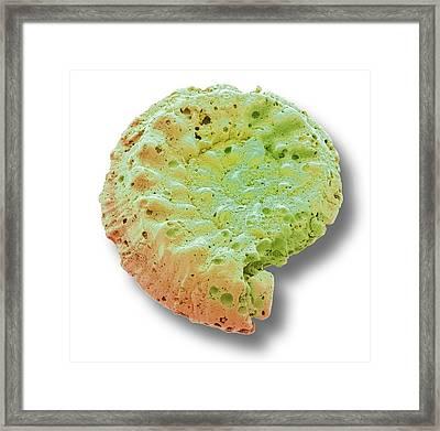 Foraminiferan Microfossil Framed Print by Steve Gschmeissner