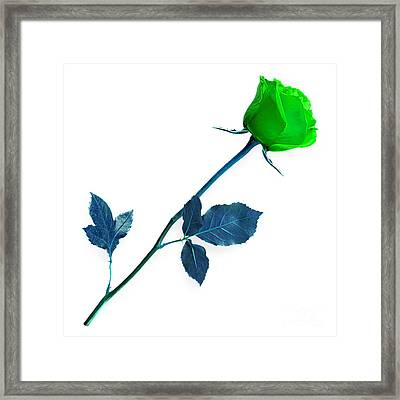 Rose Collection Framed Print by Marvin Blaine