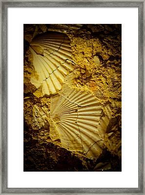 Seashell In Stone Framed Print by Raimond Klavins