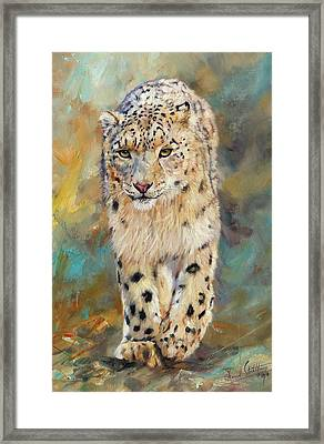 Snow Leopard Framed Print by David Stribbling