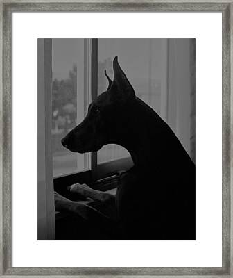 The Competition Framed Print by Rita Kay Adams