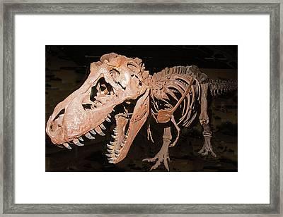 Tyrannosaurus Rex Framed Print by Millard H Sharp