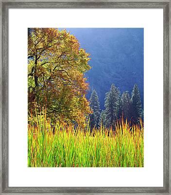Usa, California, Yosemite National Park Framed Print by Jaynes Gallery