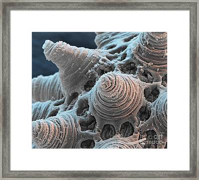 Water Bear Egg Framed Print by Eye of Science and Science Source