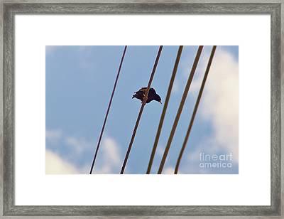 5 Wire Framed Print by Lynda Dawson-Youngclaus