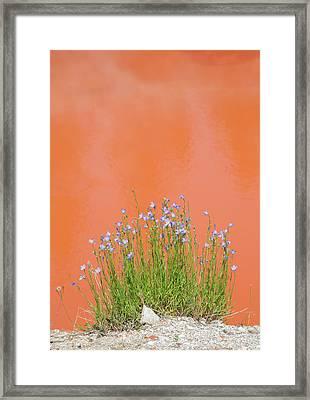 Wyoming, Yellowstone National Park Framed Print by Elizabeth Boehm