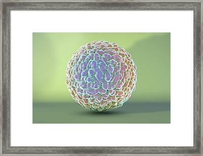 Zika Virus Framed Print by Kateryna Kon