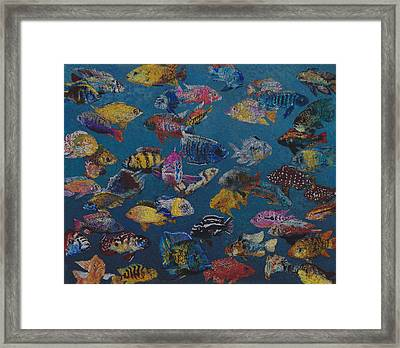50 Cichlids Framed Print by Fred Chuang