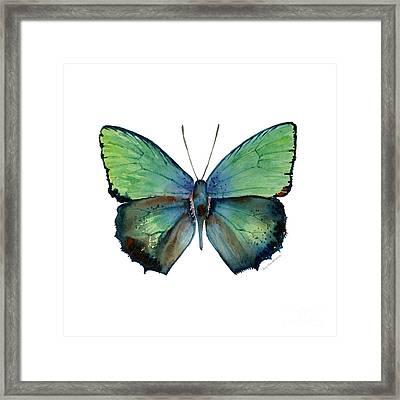 52 Arhopala Aurea Butterfly Framed Print by Amy Kirkpatrick