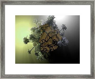 Aspergillus Fungus Framed Print by Hipersynteza