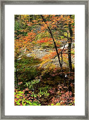 Autumn Cranberry River Framed Print by Thomas R Fletcher