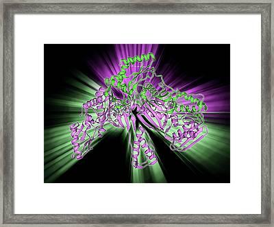 Hiv Reverse Transcription Enzyme Framed Print by Laguna Design