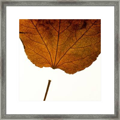 Leaf Framed Print by Bernard Jaubert