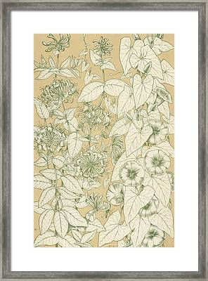 Leaves From Nature Framed Print by English School