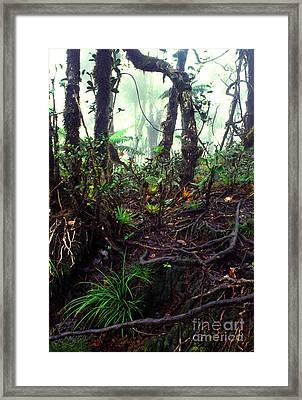 Misty Rainforest El Yunque Framed Print by Thomas R Fletcher
