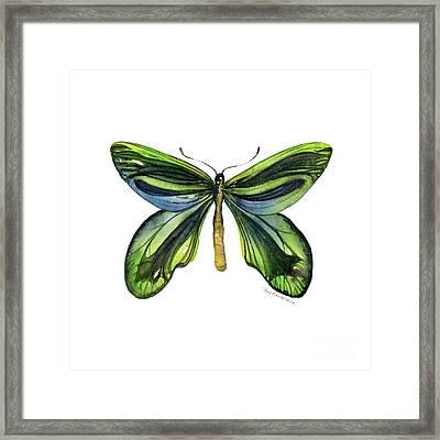 6 Queen Alexandra Butterfly Framed Print by Amy Kirkpatrick