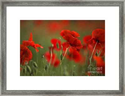 Red Framed Print by Nailia Schwarz