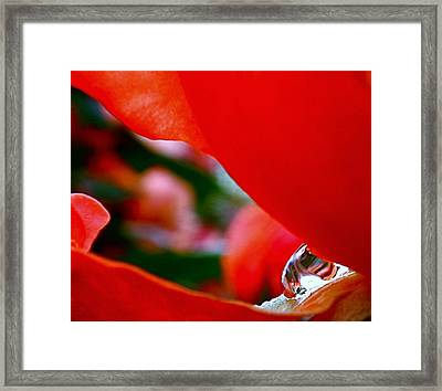 Roses After The Rain Framed Print by Rona Black