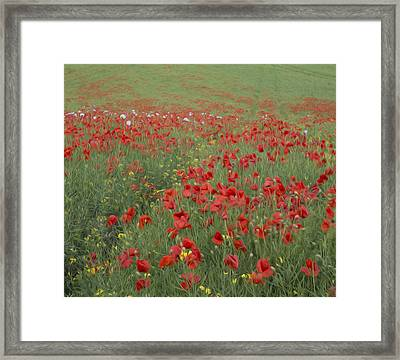Stunning Poppy Field Landscape Digital Painting Framed Print by Matthew Gibson
