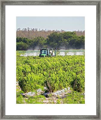 Tomato Growing Framed Print by Jim West