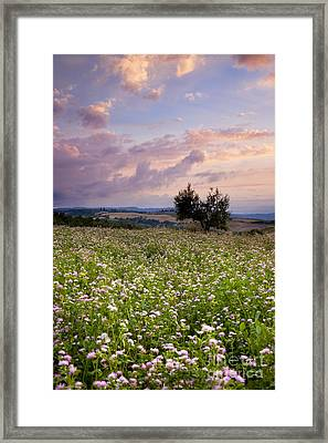 Tuscany Framed Print by Brian Jannsen